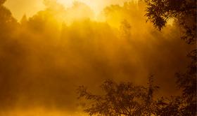 fotografie workshop bij zonsopkomst in de Biesbosch