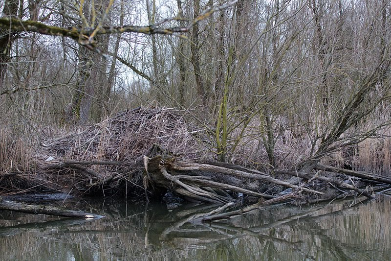 beverburcht biesbosch