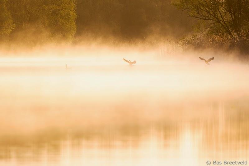 mist Biesbosch