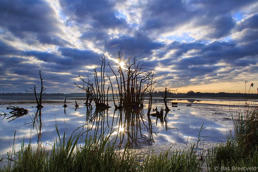 biesbosch fotografie