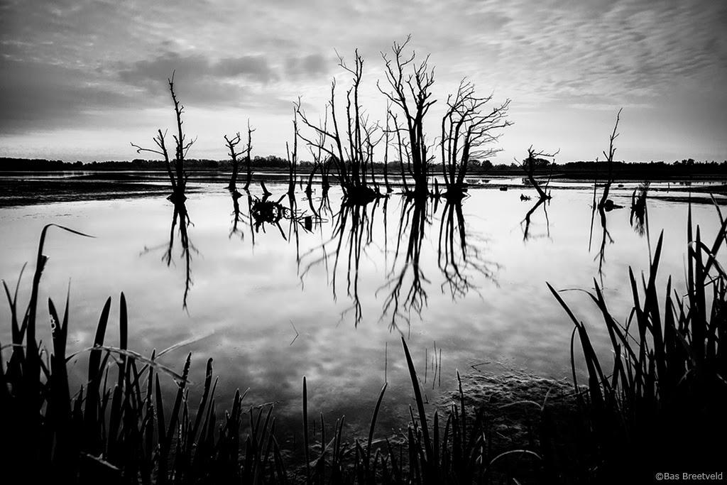 Biesbosch Zuiderklip