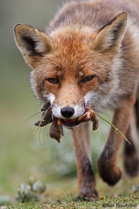 vossen awd