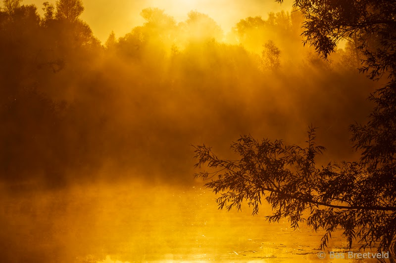 Biesbosch zonsopgang