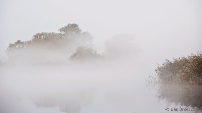witte wieven Biesbosch