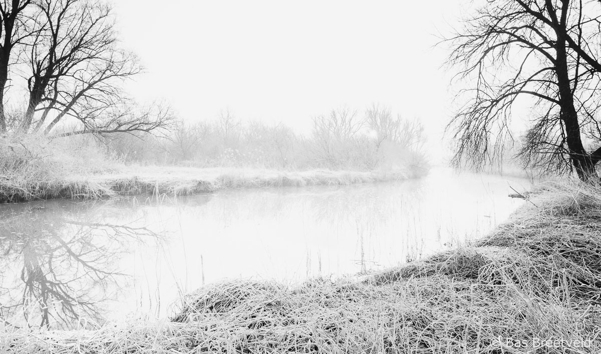 Biesbosch in de winter