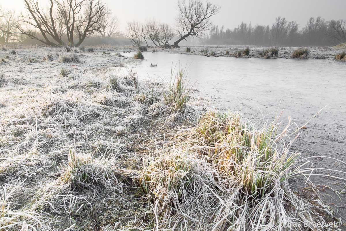 winter in de Biebosch