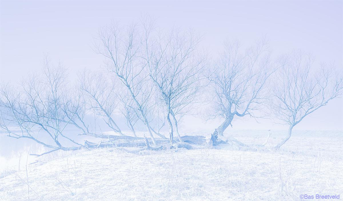 Biesbosch winter