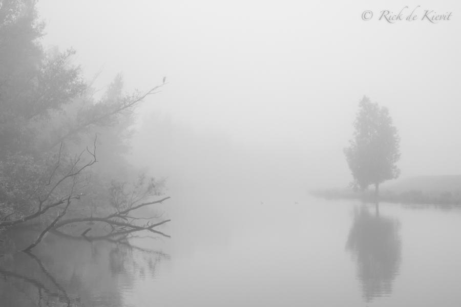 Mist in de Biesbosch