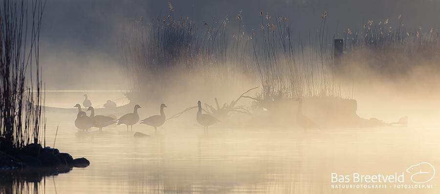 Biesbosch zonsopkomt 4