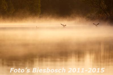 Foto's Biesbosch 2011-2015