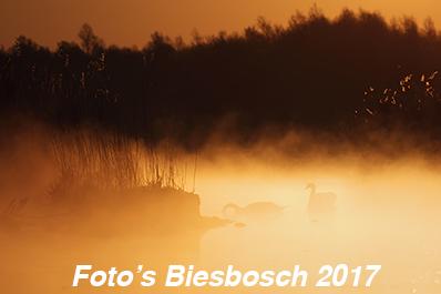 Biesbosch foto's 2017