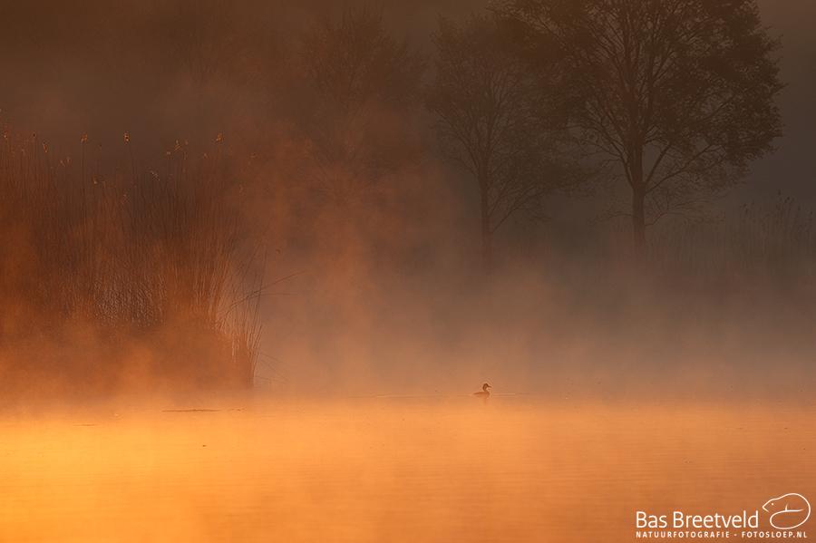 fotografie Biesbosch