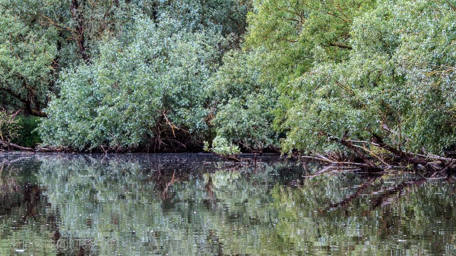 Biesbosch wilgenbos