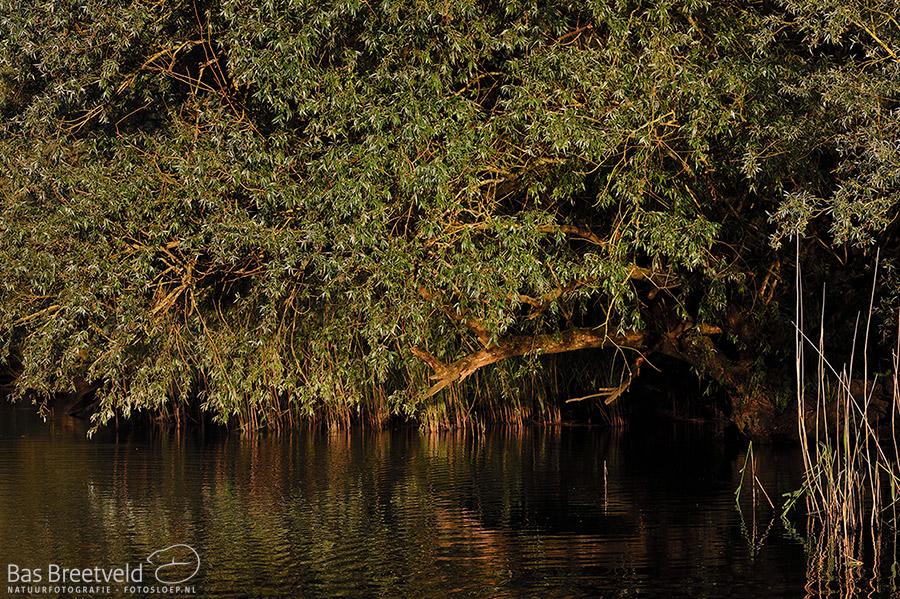 Biesbosch avond