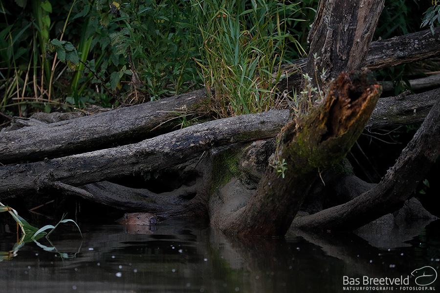 Biesbosch fotografie 1