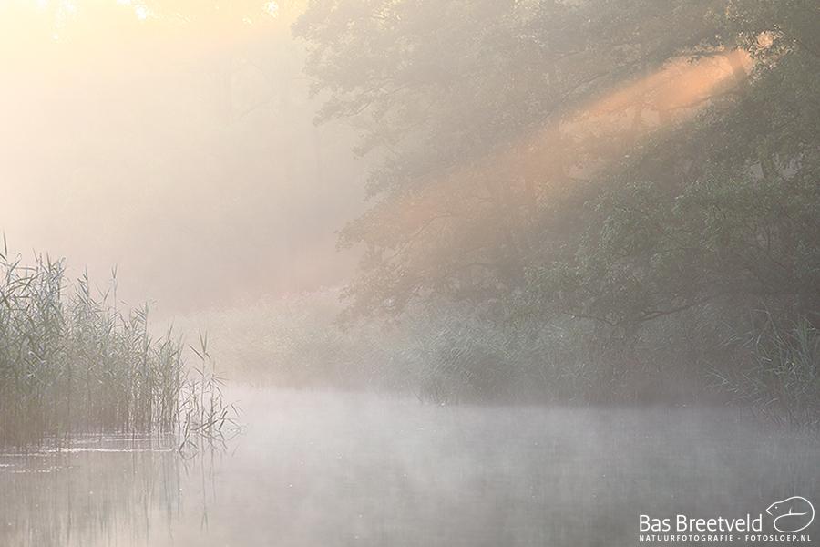 biesbosch ochtend sfeeer