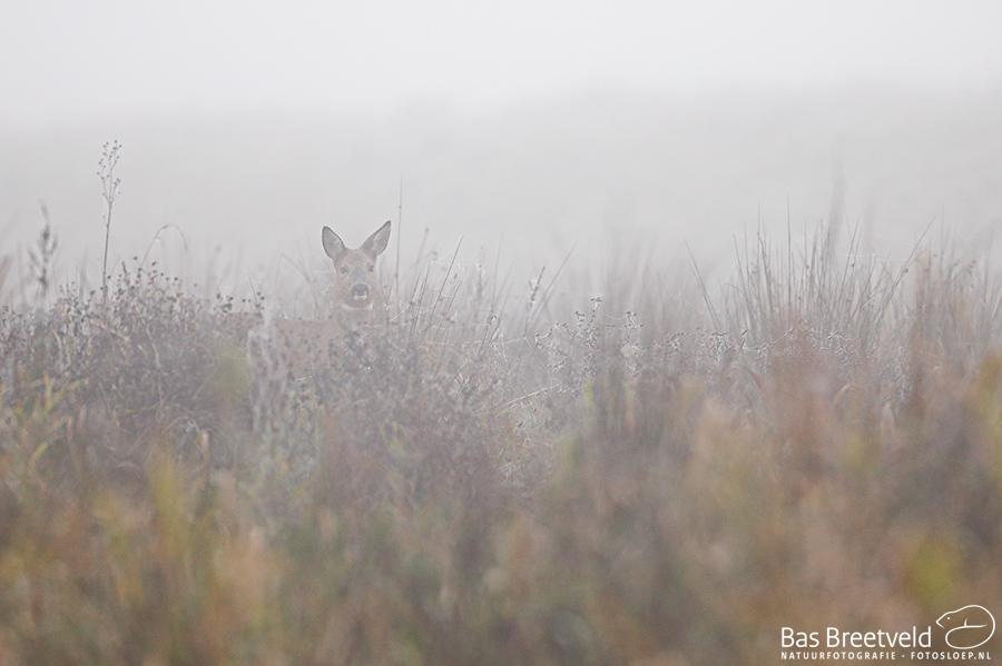 Biesbosch dichte mist 9
