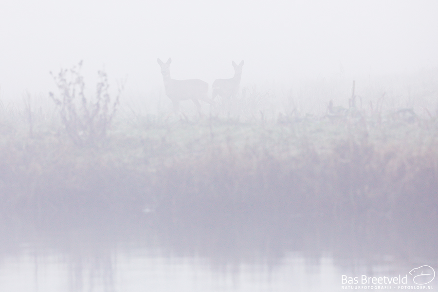 Biesbosch dichte mist 2
