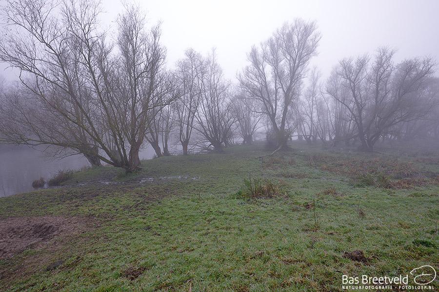 Biesbosch dichte mist 3
