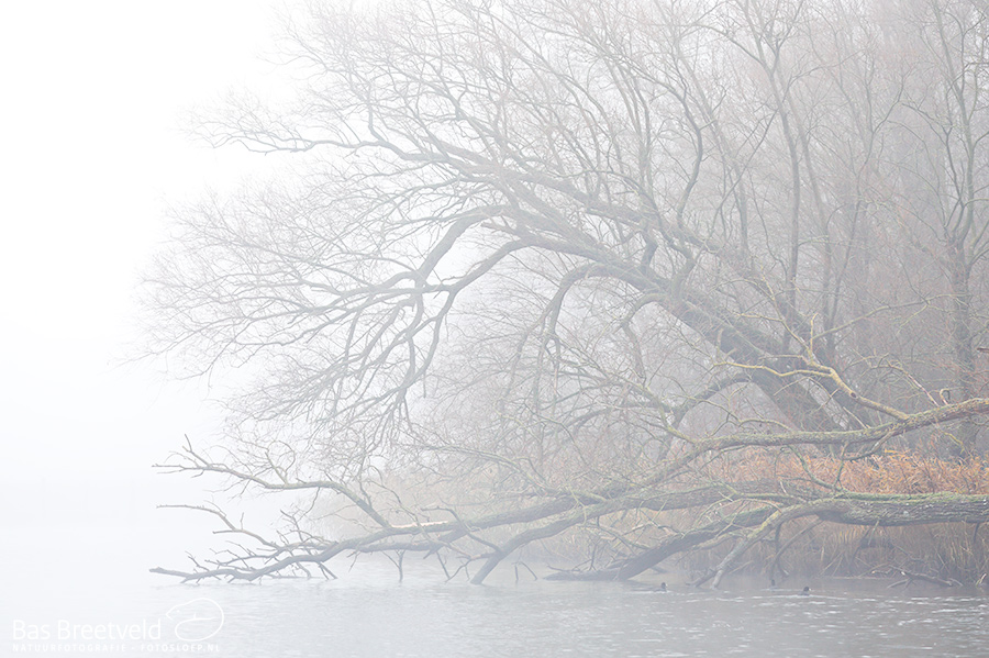 Biesbosch dichte mist 6