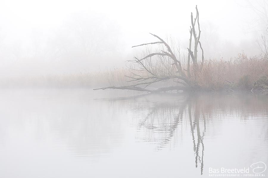 Biesbosch dichte mist 7