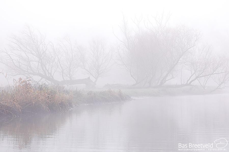 Biesbosch dichte mist 8