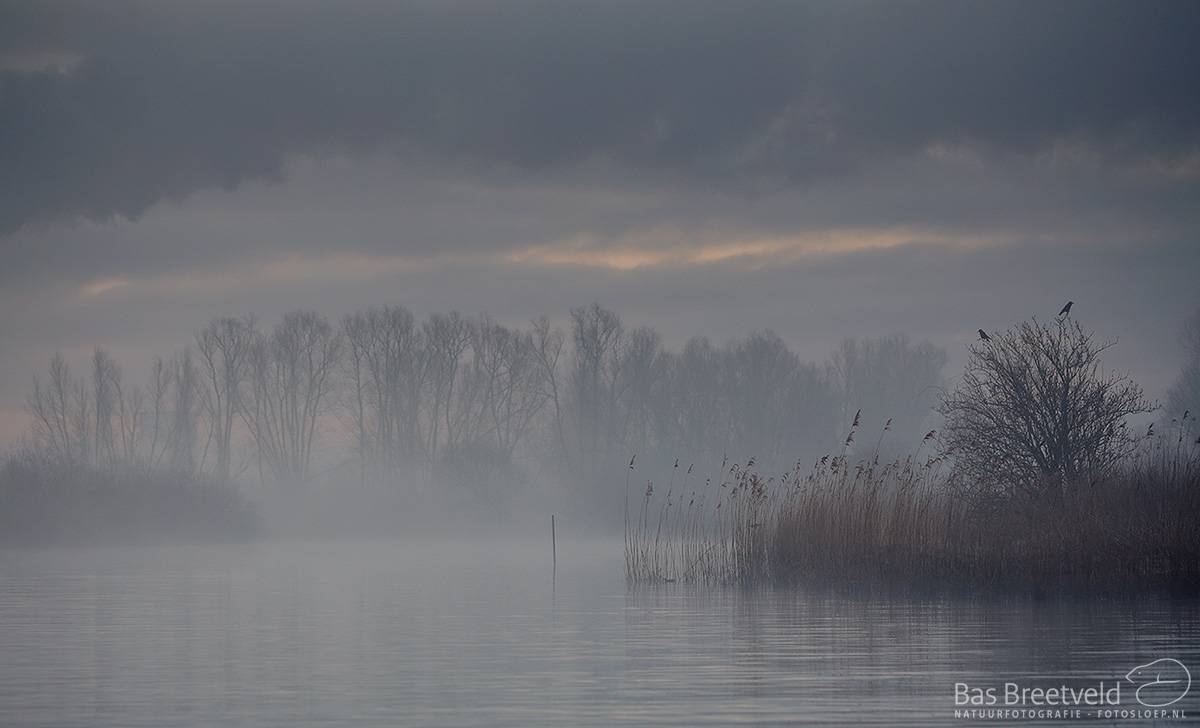 0545 | Biesbosch | Canon 5D Mark IV | EF 100mm F/2.8 L Macro IS | ISO 400, F3.5, 1/160 Sec.
