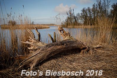 Biesbosch foto's 2018